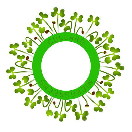 Microgreens Collard. Seed packaging design, round element in the center. Around him sprouts. Vitamin supplement, vegan food
