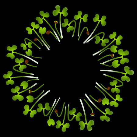 Microgreens Collard. Arranged in a circle. Vitamin supplement, vegan food. Black background