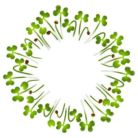 Microgreens Collard. Arranged in a circle. Vitamin supplement, vegan food