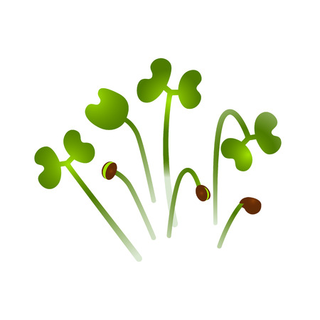 Microgreens Collard. Bunch of plants. Vitamin supplement, vegan food