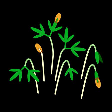 Microgreens Cress. Bunch of plants. Vitamin supplement, vegan food. Black background