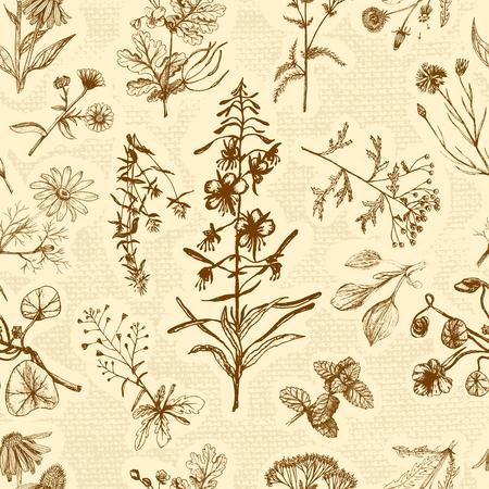 Medicinal herbs seamless pattern.