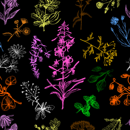 Medicinal herbs seamless pattern multicolor. Stockfoto