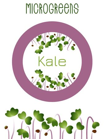 Microgreens Kale. Seed packaging design, round element in the center. Sprouting seeds of a plant