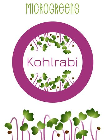 Microgreens Kohlrabi. Seed packaging design, round element in the center. Sprouting seeds of a plant. Vitamin supplement, vegan food