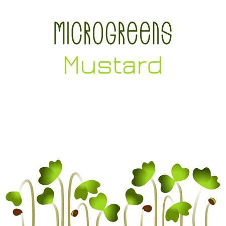 Microgreens Mustard. Seed packaging design. Sprouting seeds of a plant