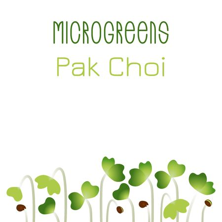 Microgreens Pak Choi. Seed packaging design. Sprouting seeds of a plant