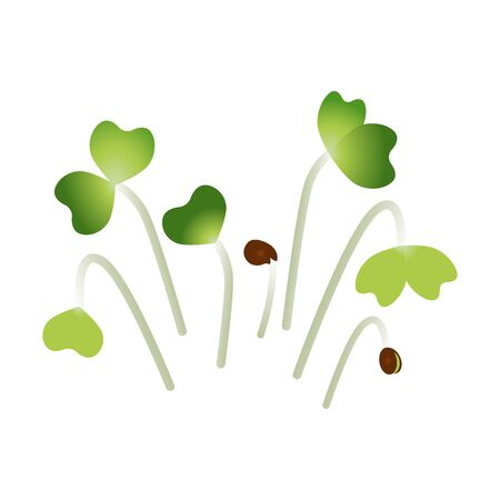 Microgreens Pak Choi. Bunch of plants. White background