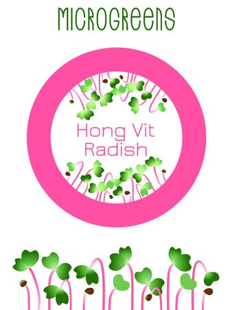 Microgreens Hong Vit Radish. Seed packaging design, round element in the center. Sprouting seeds of a plant