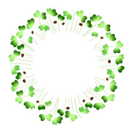 Microgreens Daikon Radish. Arranged in a circle. White background