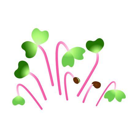 Microgreens Hong Vit Radish. Bunch of plants. White background Illusztráció