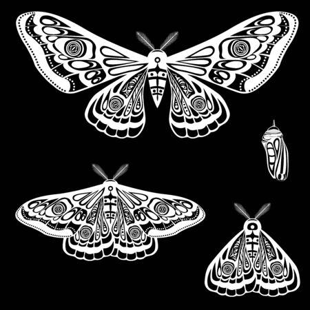 Papillon de nuit, chrysalide de papillon. Illustration vectorielle. Diverses poses de papillons, ailes ouvertes et fermées.