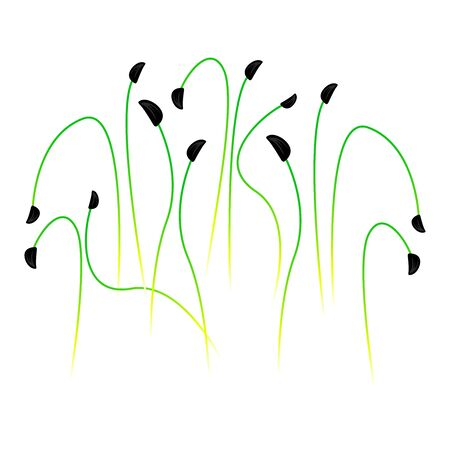 Microgreens Scallions. Bunch of plants. White background