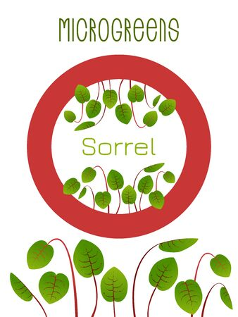 Microgreens Sorrel. Seed packaging design, round element in the center. Sprouting seeds of a plant