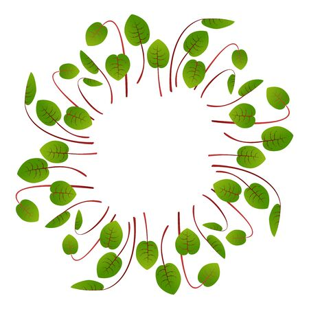Microgreens Sorrel. Arranged in a circle. White background