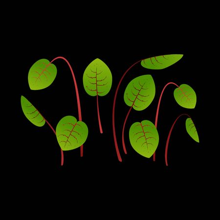 Microgreens Sorrel. Bunch of plants. Black background Ilustracja