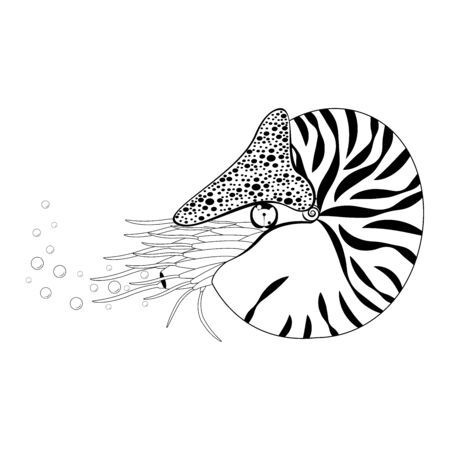 Chambered Nautilus Pompilius. Mollusc cephalopod, animal, marine. Releases bubbles. Black and white vector illustration. Isolated on white