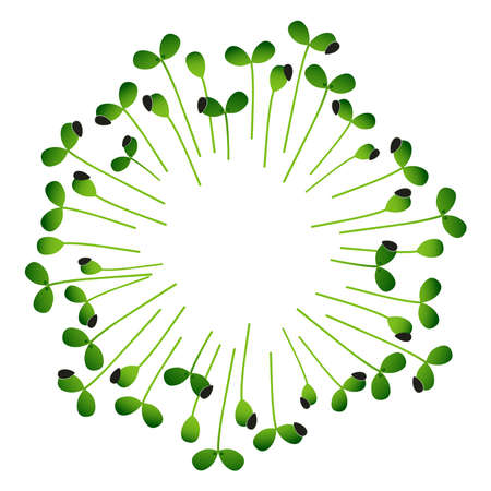 Microgreens Sunflower. Arranged in a circle. White background
