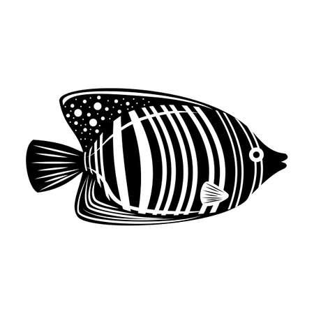 Royal angelfish. Black and white tropical fish. Isolated on white. Underwater world. Illusztráció