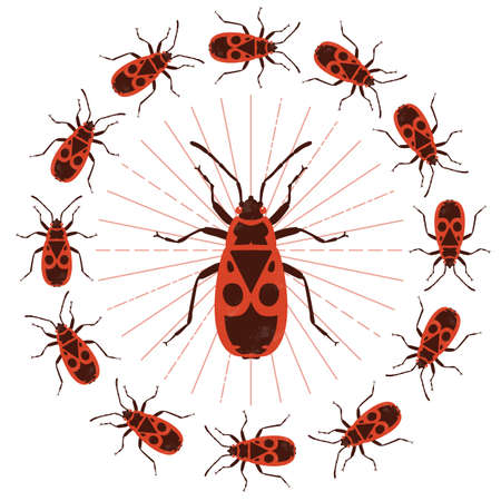 Firebug. Vector illustration. Isolated on a white