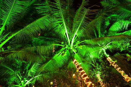 Palm trees at night. Long exposure shot. HDR processed. photo