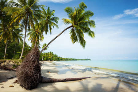 Fallen palm tree on a sand of the tropical beach photo