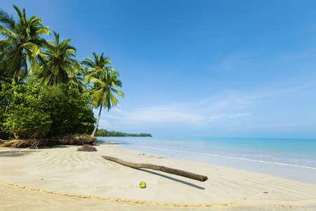 砂に落ちたヤシの木