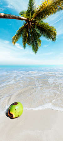 tree vertical: Coconut on a sand. Vertical panoramic composition. Stock Photo