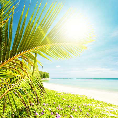 Tropical beach in sunny day photo