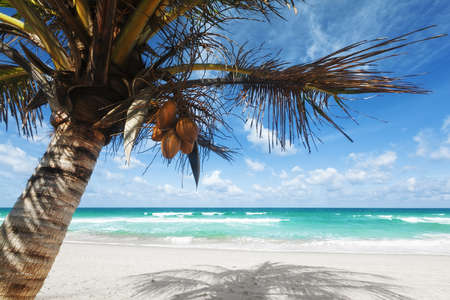 熱帯のビーチ風景