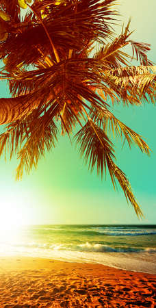 Tropical beach at sunset time. Vertical panoramic composition.