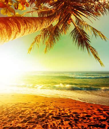 熱帯のビーチに沈む夕日。縦の収穫。
