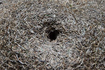 anthill: Entrance to the large anthill