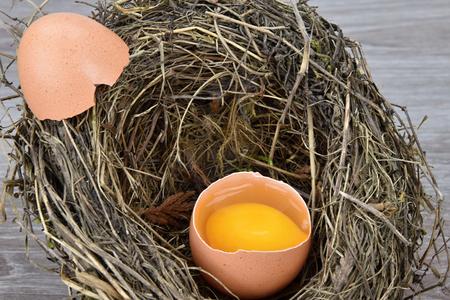 Open egg in a birds nest, shell lying on the nest. Egg. Stock Photo