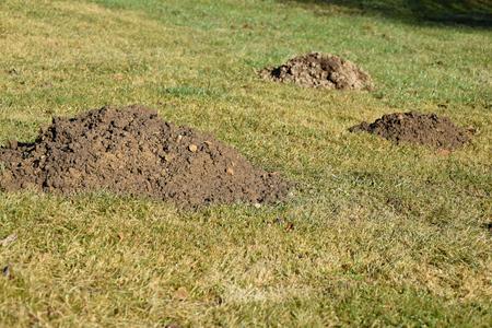 Molehill the garden mole. Mole Stock Photo