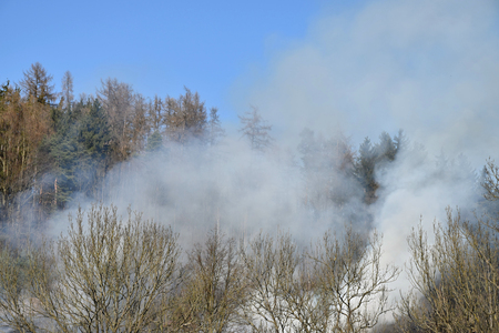 The fire of dry grass next to the forest, rising smoke Stock Photo