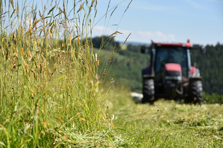 The tractor cuts the grass on the meadow. Focus on grass.
