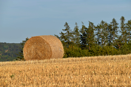 Round bundle of straw. Rural landscape with agricultural fields. The field is harvested. Landscape at sunset