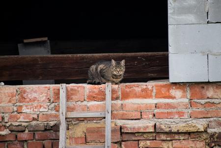 Gray cat is in a dormer of bricks