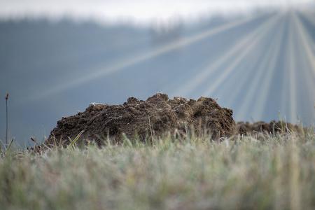 Molehill the garden mole. Molehill on the horizon of frosty meadows. Sun rays