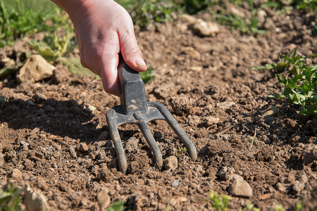 The hand of a woman adjusts the ground to plant seedlings. Hand holding gardening tool Фото со стока