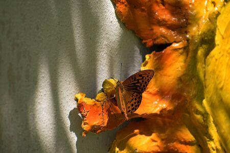 Orange butterfly sitting on orange sculpture hanging on wall