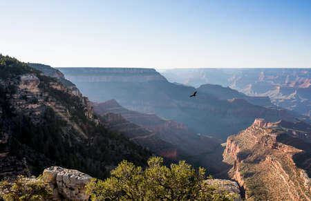 Lonely eagle flying over Grand Canyon, Arizona, USA. Фото со стока