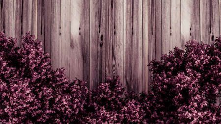 Beautiful pink background with leaves and wood texture, season of the year. 3d rendering, 3d illustration. Imagens