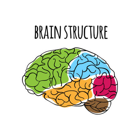 BRAIN STRUCTURE Nervous System Anatomy Human Scheme Medicine Vector Illustration