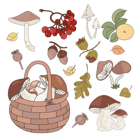 FOREST GOODS Autumn Fall Season Nature Vector Illustration Set for Print Fabric and Design