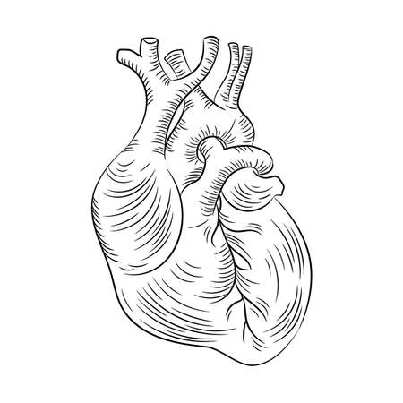 ANATOMIC HEART Structure Medicine Education Diagram Vector Scheme Human Monochrome Hand Draw Vector Illustration