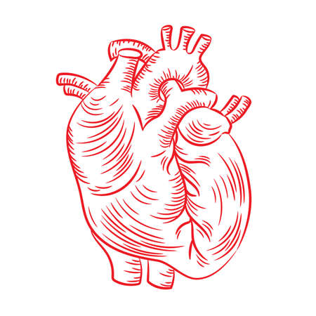RED HEART Anatomic Structure Medicine Education Diagram Vector Scheme Human Hand Draw Vector Illustration Print 向量圖像