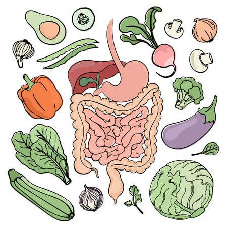 GASTROINTESTINAL TRACT VEGAN Medicine Education Human Nutrition Vector Illustration Diet Set Ilustracja