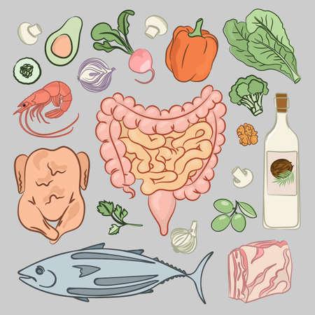 HEALTHY INTESTINES DIET Human Nutrition Medicine Education Vector Illustration Set Çizim
